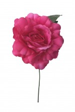 Spanische Flamencorose, rosa